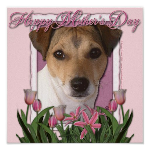 Día de madres - tulipanes rosados - Jack Russell Póster