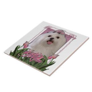 Día de madres - tulipanes rosados - maltés azulejos