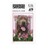 Día de madres - tulipanes rosados - mastín - fisgó
