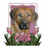 Día de madres - tulipanes rosados - Rhodesian Ridg Esculturas Fotograficas
