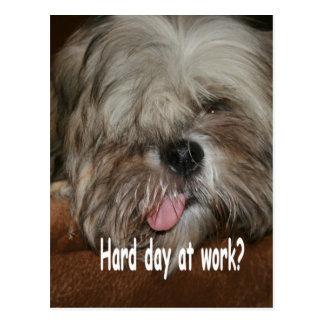 Día duro en el tzu de shih del perro de perrito de tarjetas postales