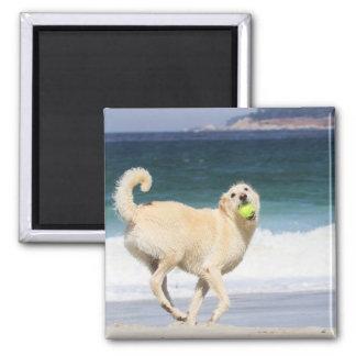 Día feliz de Labradoodle en la playa Imán De Nevera