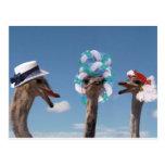 Día loco del gorra en las razas tarjetas postales
