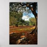 Día soleado en el jardín verde oliva poster