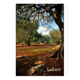 Día soleado en el jardín verde oliva postales