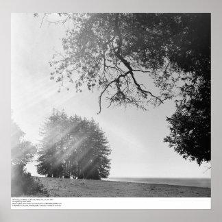 Día soleado, Universidad de California, Santa Cruz Posters