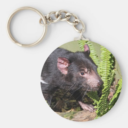 Diablo tasmano, Australia Llavero Redondo Tipo Pin