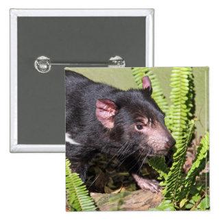 Diablo tasmano, Australia Pin Cuadrado