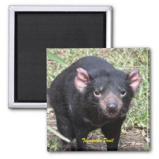 Diablo tasmano imán cuadrado