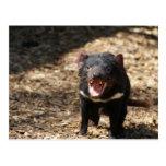 Diablo tasmano postal