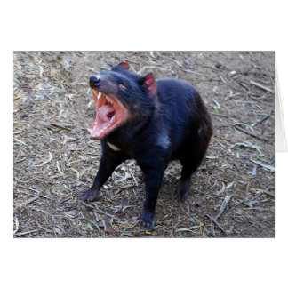 Diablo tasmano que exhibe su bostezo vicioso tarjeta pequeña