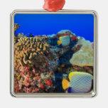 Diacanthus real de Pygoplites del Angelfish), Adorno Navideño Cuadrado De Metal