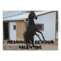 DIADHEMS DREAM, REARING TO BE YOUR VALENTINE CARD