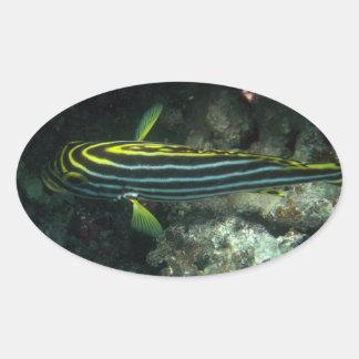 Diagonal Banded Sweetlip (Plectorhinchus lineatus) Sticker