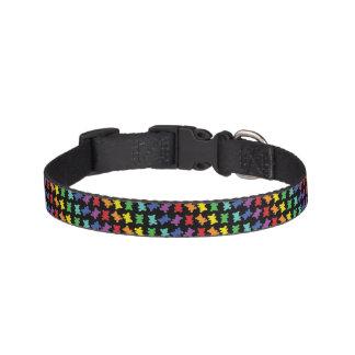 Diagonal Rainbow Teddy Bear Collar On Black