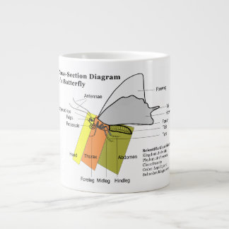 Diagram of a Common Butterfly Anatomy Lepidoptera Giant Coffee Mug
