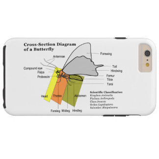 Diagram of a Common Butterfly Anatomy Lepidoptera Tough iPhone 6 Plus Case