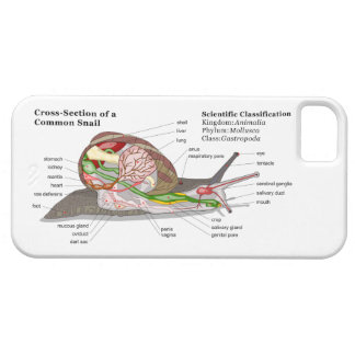Diagram of a Common Garden Snail (Helix aspersa) iPhone 5 Covers
