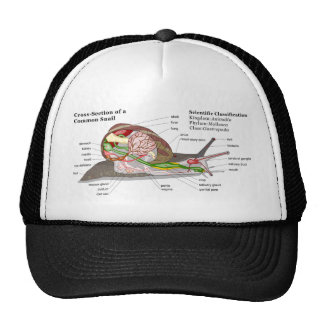 Diagram of a Common Garden Snail (Helix aspersa) Trucker Hat