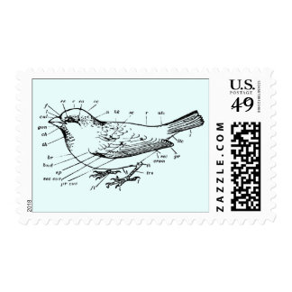 Diagram of a Sparrow Postage Stamps