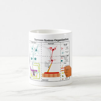 Diagram of Basic Nervous System Functions Coffee Mug