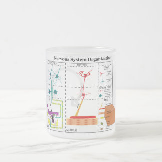 Diagram of Basic Nervous System Functions Frosted Glass Coffee Mug