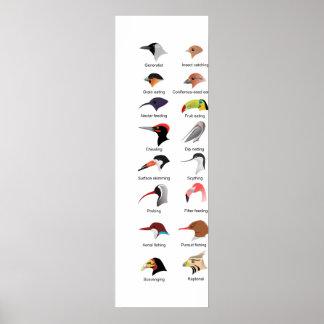 Diagram of Different Bird Beak Adaptations Poster