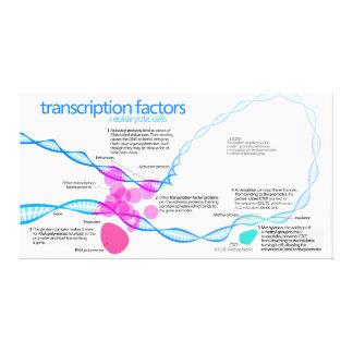 Diagram of gene transcription factors canvas print