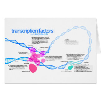 Diagram of gene transcription factors card