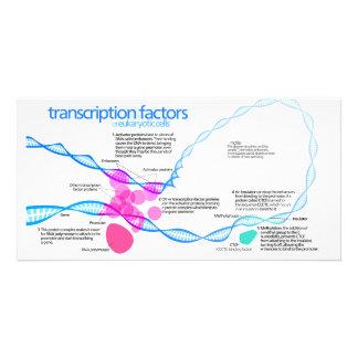 Diagram of gene transcription factors photo card