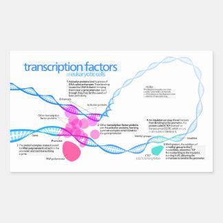 Diagram of gene transcription factors rectangular sticker