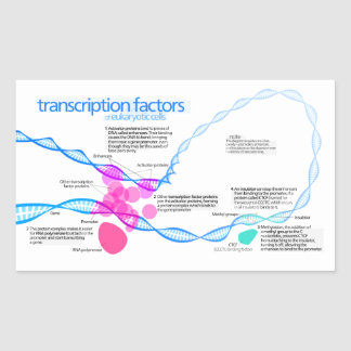 Diagram of gene transcription factors sticker