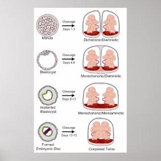 Diagram of Human Biological Placentation Poster