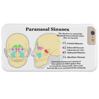 Diagram of Human Paranasal Sinuses Barely There iPhone 6 Plus Case