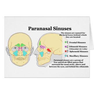 Diagram of Human Paranasal Sinuses Card