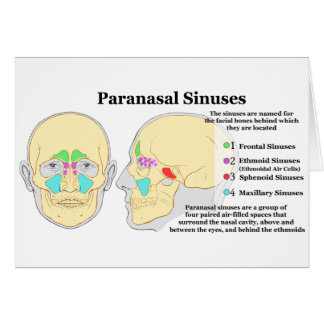 Diagram of Human Paranasal Sinuses Greeting Card