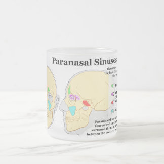 Diagram of Human Paranasal Sinuses Frosted Glass Coffee Mug