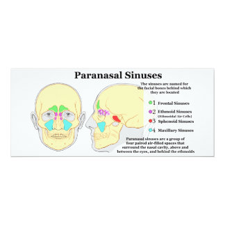 Diagram of Human Paranasal Sinuses 4x9.25 Paper Invitation Card