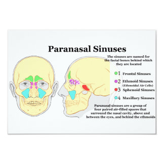 Diagram of Human Paranasal Sinuses 3.5x5 Paper Invitation Card