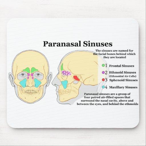 Diagram of Human Paranasal Sinuses Mouse Pad | Zazzle