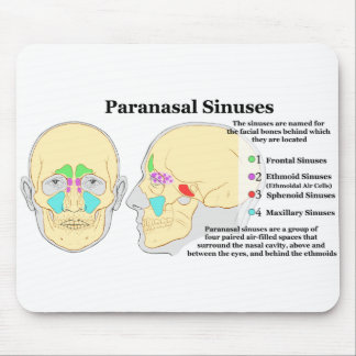 Diagram of Human Paranasal Sinuses Mouse Pad