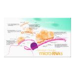 Diagram of microRNA Canvas Print