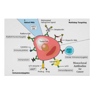Diagram of Monoclonal Antibodies for Cancer Poster