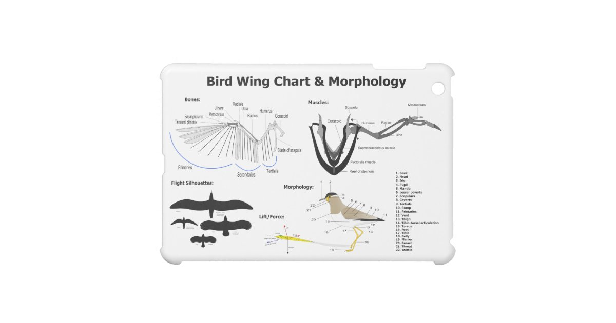 diagram of the anatomy of bird wings ipad mini cover
