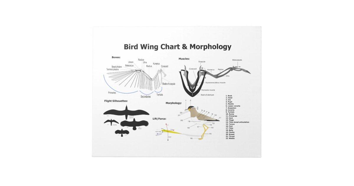 bird flight diagram diagram of the anatomy of bird wings notepad zazzle com  anatomy of bird wings notepad