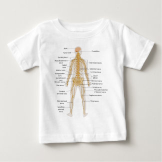 Diagram of the Human Body's Nervous System Baby T-Shirt