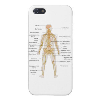 Diagram of the Human Body's Nervous System iPhone SE/5/5s Case