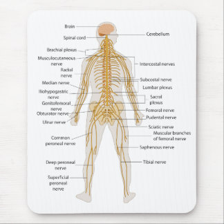 Diagram of the Human Body's Nervous System Mouse Pad