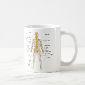 Diagram of the Human Body's Nervous System Mugs