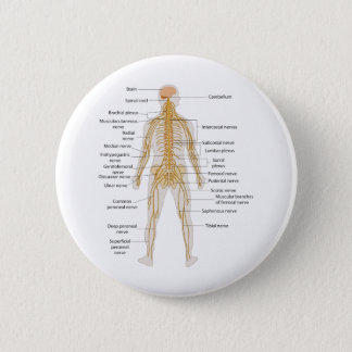 Diagram of the Human Body's Nervous System Pinback Button